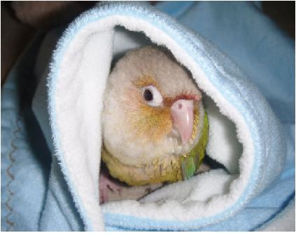 tuppi under the blanket.jpg