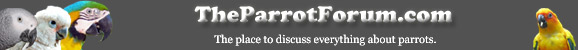 Parrot Forum logo with parrots which reads TheParrotForum.com, the place to discuss anything about parrots